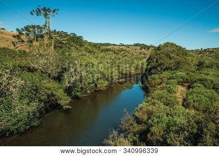 Brook Passing Through A Lush Forest With Pine Trees In The Rural Lowlands Called Pampas Near Cambara