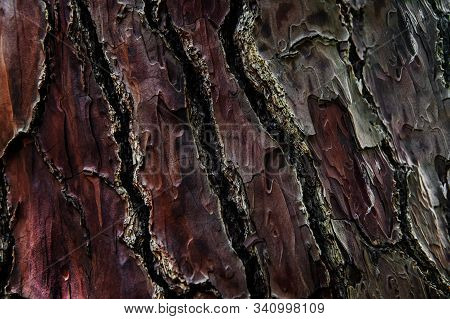 Texture Of Old Wrinkled Leathery Wood. The Bark Of The Tree Is Damaged. Selective Focus