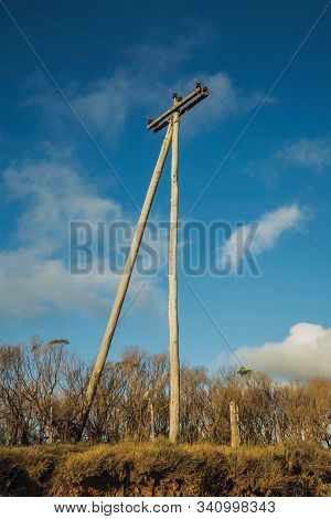 Wooden Light Poles On Landscape Of Rural Lowlands Called Pampas Covered By Parched Bushes Near Camba