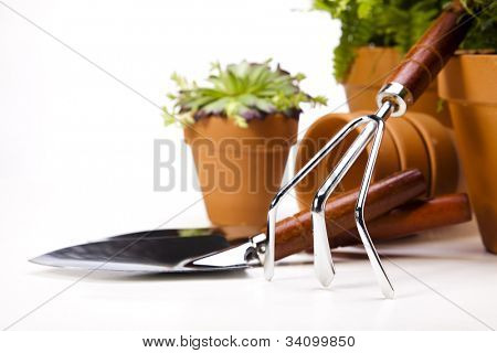 Gardening concept, work tools, plant