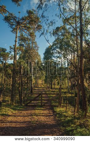 Trees Covered By Lichen And Epiphytes With Wooden Farm Gate On Dirt Pathway At Sunset Near Cambara D