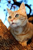 Portrait of Ginger Tubby sitting in a tree poster