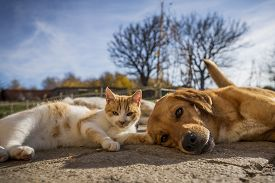 Dog And Cat Play Together. Cat And Dog Lying Outside In The Yard. Kitten Sucks Dog Breast Milk. Dog