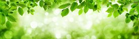 Nature Of Green Leaves. Green Leaf Texture Or Leaf Background. Tree Leaves Nature Background.