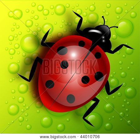 Vector ladybird on green background with water drops.