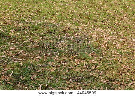 Fallen Autumn Leaves On Green Grass