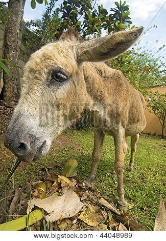 Healthy Donkey Eating