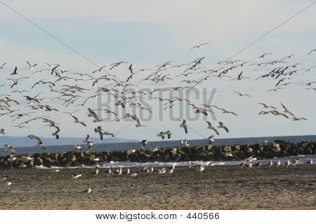 Flock Of Seagulls