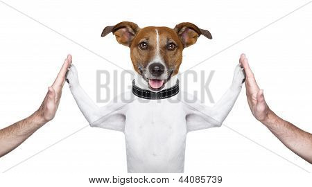 poster of dog giving high five on both sides with male hands