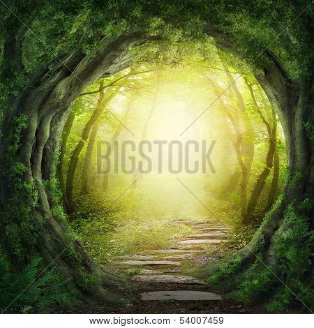 Camino mágico bosque oscuro