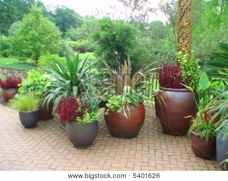 Plants On A Patio