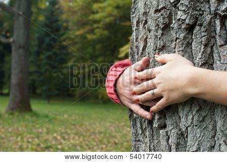 Hands Around Tree