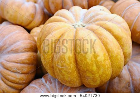Pile of pumpkins. Can be used as background.