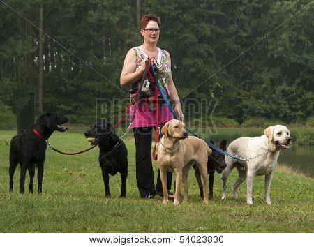 Woman Walks With Four Dogs On Green Grass
