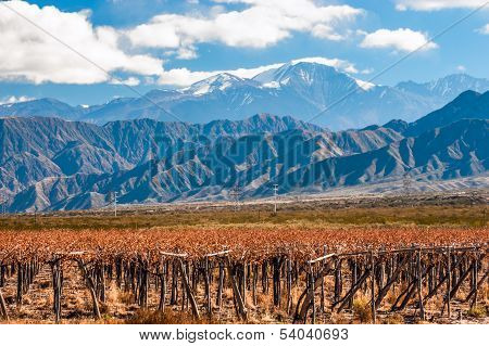 Volcano Aconcagua And Vineyard. Argentina