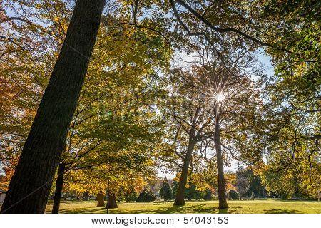 Trees and sunburst
