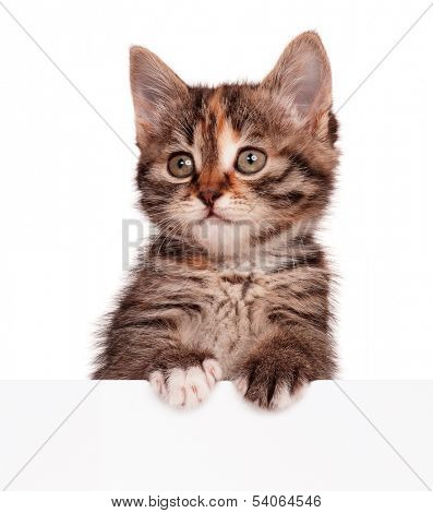 Cute kitten with blank billboard, isolated on white background poster