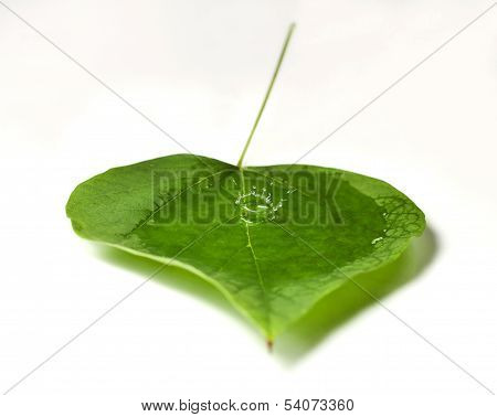 Waterdrops In A Leaf