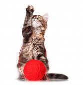 Cute kitten with red clew of thread, isolated on white background  poster