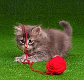 Cute grey kitten playing red clew of thread on artificial green grass  poster