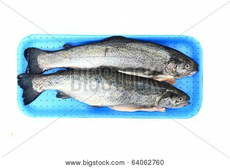 Twoo Rainbow Trouts