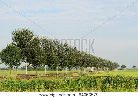 Tree Landscape In Holland