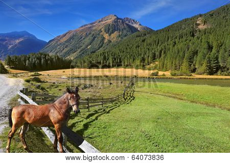 Rural pastoral. Farm fields separated from the dirt road the low fence made �¢??�¢??of logs. Behind the fence stands the rustic horse