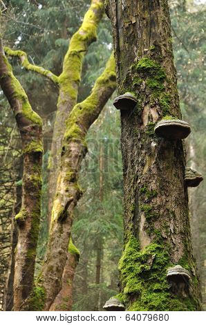 Tree Trunk With Moss And Polypore