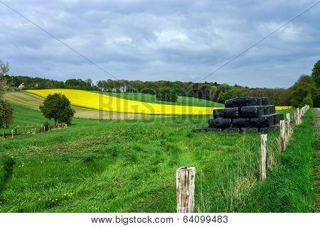 Colorful Field Landscape