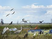 Florida Wetlands Collage With Birds And Animals poster