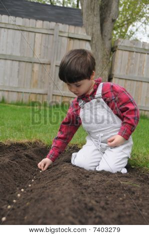 Little Boy Planting A Row Of Seeds In Spring