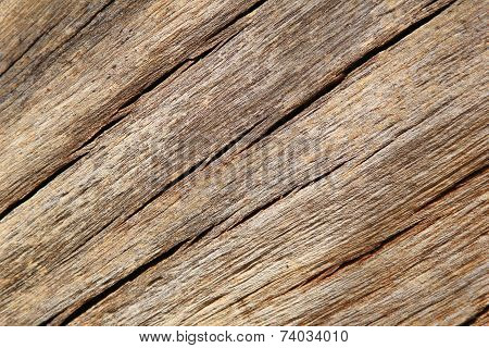 A close-up view of cracked a Hardwood tree trunk, from an old False Camel Thorn Tree, as seen in the wilds and wilderness of Africa. poster