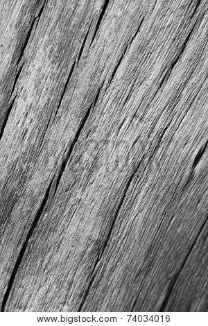 A close-up view of cracked a Hardwood tree trunk, from an old False Camel Thorn Tree, as seen in the wilds and wilderness of Africa.  In Black and White (Monochrome). poster