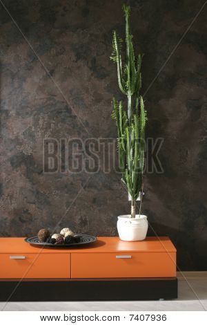 high cactus on the chest of drawers