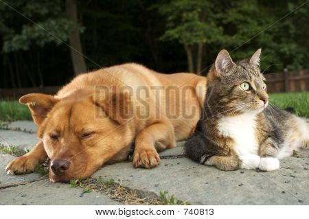 poster of Dog and Cat (Dude wake up, we have company)