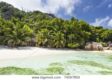 Palm Trees And Perfect Beach, La Digue, Seychelles