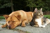 Dog and Cat (Dude wake up, we have company) poster