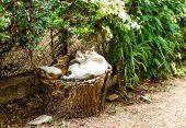 Three cats sleeping on stump in the garden poster
