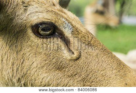 deer Cervidae laydown sleeping concept