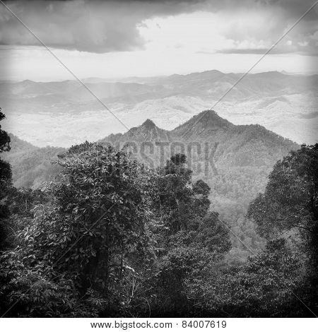 Queensland Rainforest Black And White