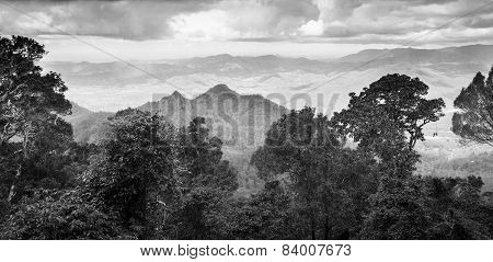 Queensland Rainforest Black And White