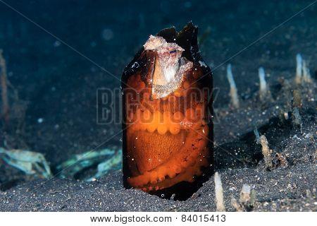 A Coconut Octopus hides inside a broken glass bottle on a black sandy seabed poster