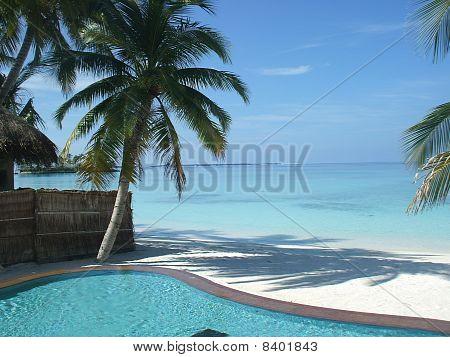 Pool and palm tree
