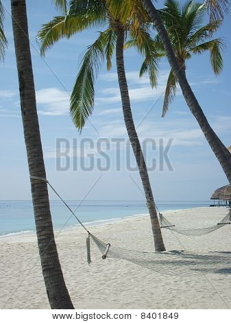 Hammocks and palm trees