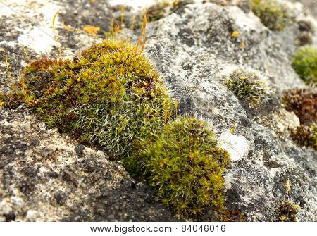 Patch of moss
