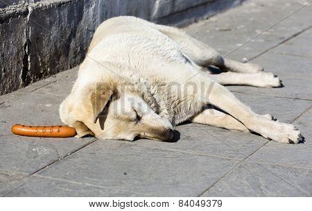 Dog Weenie