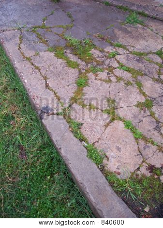 cracked sidewalk with grass