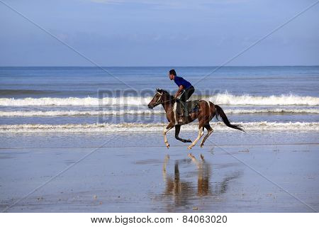 Running Horse On The Beach