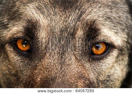 Dog face. Dog view.