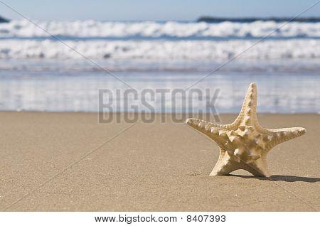 Starfish In Sand.